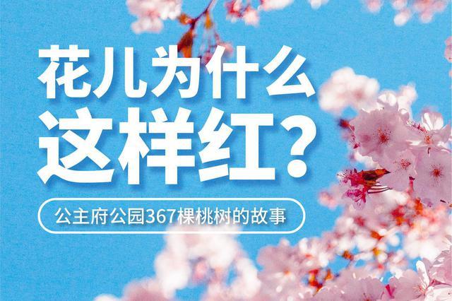 花儿为什么这样红?公主府公园367棵桃树的故事