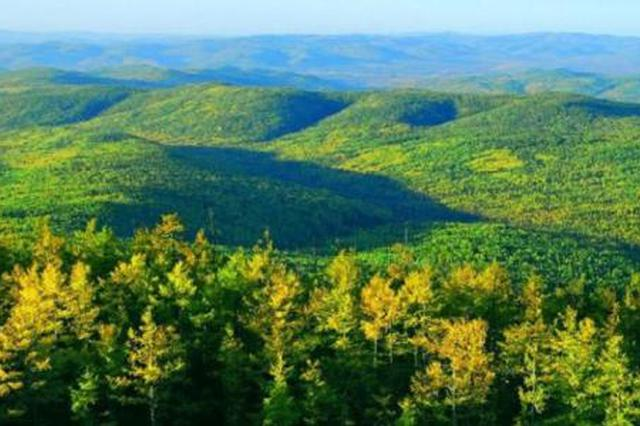"""内蒙古大兴安岭:中国最大国有林区致力从""""颜值""""到""""价值"""""""