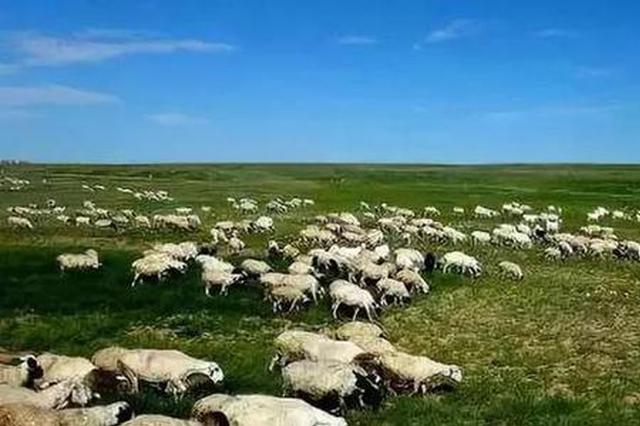 """内蒙古锡林郭勒草原2.24亿亩草场迎来""""带薪休假"""""""