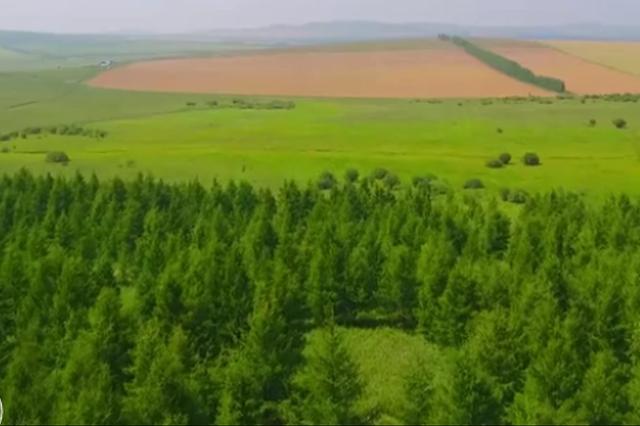"""百万亩土地遭遇""""一刀切""""式退耕 """"毁粮造林""""背后矛盾难解"""