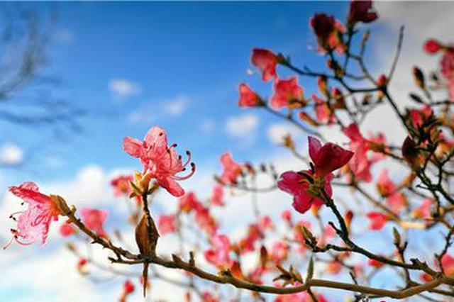 """抓住春天的尾巴 赴一场""""花中西施""""的春日之约"""