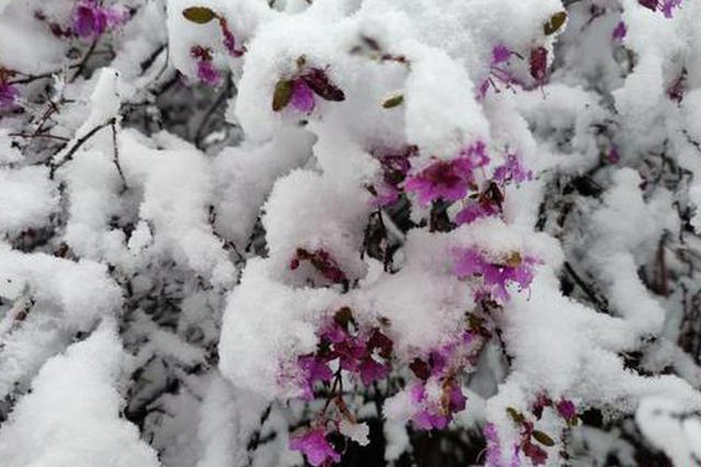 """内蒙古多地入夏""""失败"""" 呼伦贝尔地区降雪"""