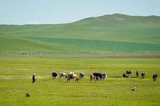 呼倫貝爾草原披綠裝
