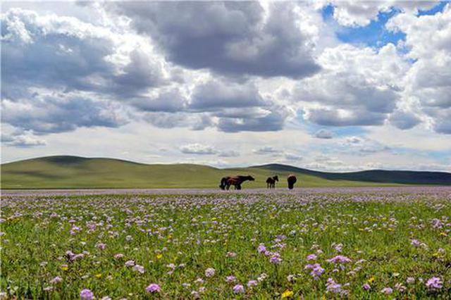 """爱上内蒙古 丨 初夏走进风景如画的""""最美山地草原"""""""