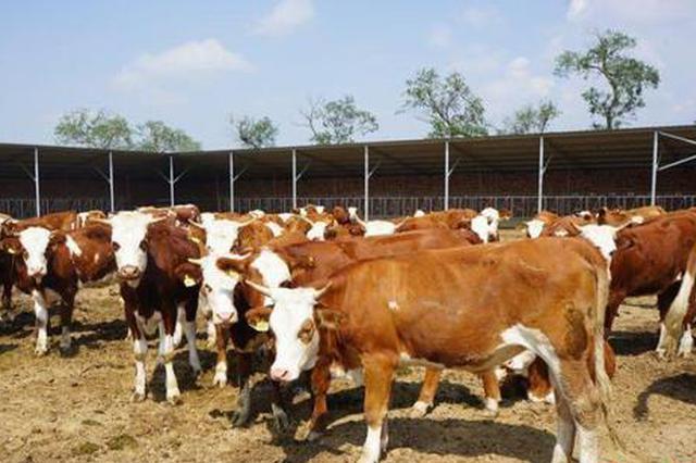 """生态引领农牧业发展 内蒙古粮食产量实现""""17连丰"""""""