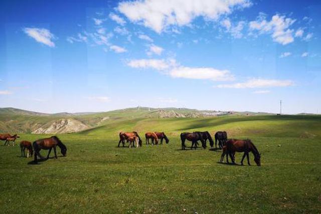 距离北京最近的内蒙古草原迎来旅游季:在鲜花草原清凉一夏