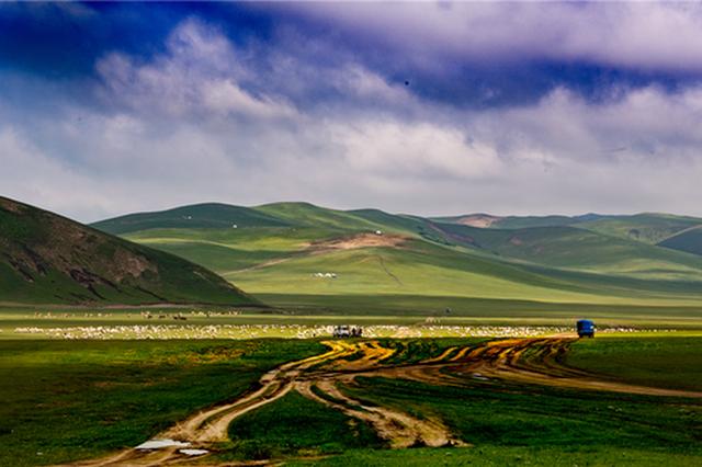 爱上内蒙古 丨 夏日转场牧民与牛羊 在草原上奏出宏大的乐章
