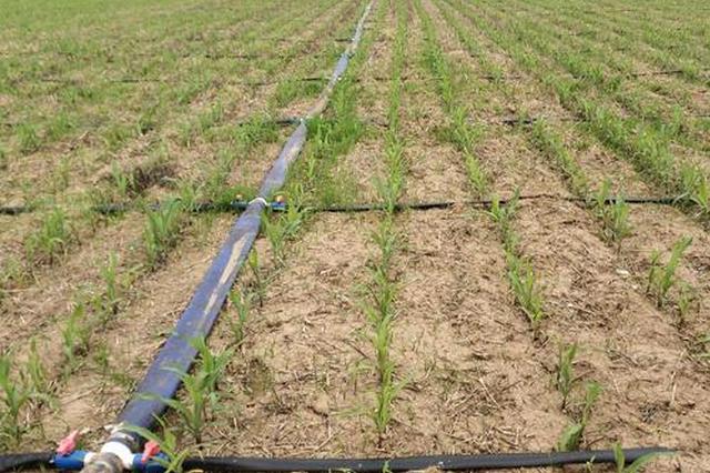 呼和浩特市和林格爾縣節水灌溉:潤了良田 美了心田