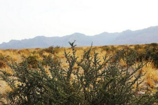 70家企業已退出西鄂爾多斯國家自然保護區