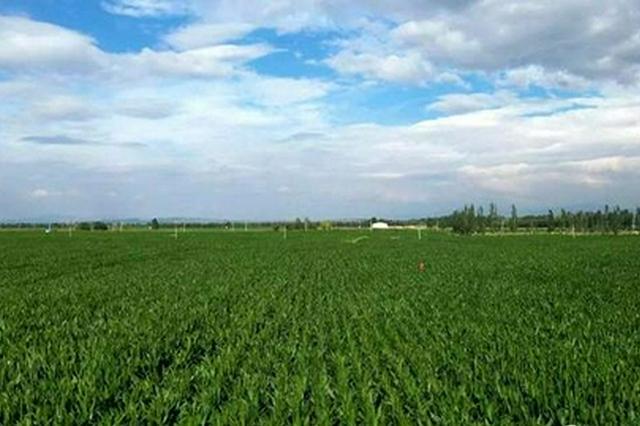 呼和浩特市和林格爾節水灌溉:潤了良田 美了心田