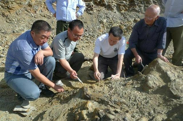 完美巴彥淖爾龍——我國發現最完整的禽龍類化石