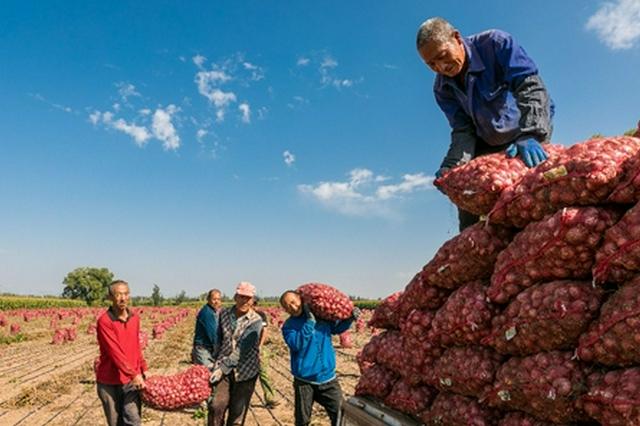 """內蒙古自治區:""""訂單農業""""促進農民增收"""