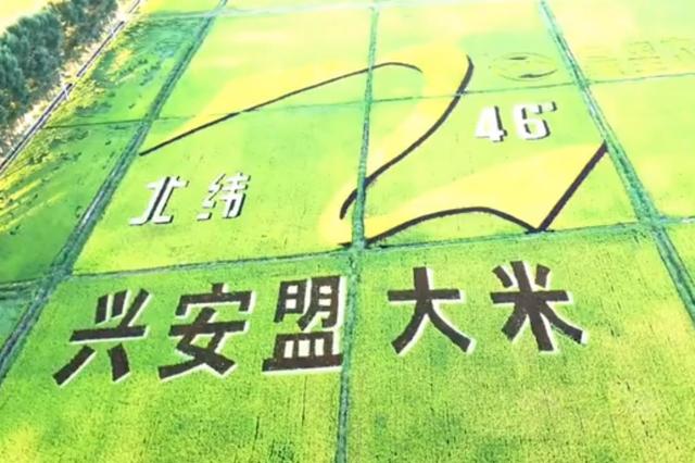 """内蒙古自治区兴安盟:北疆稻田""""种出""""巨幅画"""