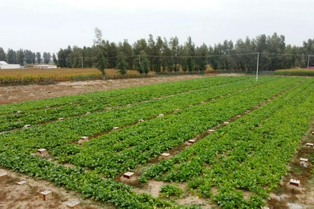 生态向好产业精 库布其沙漠实现了绿富同兴