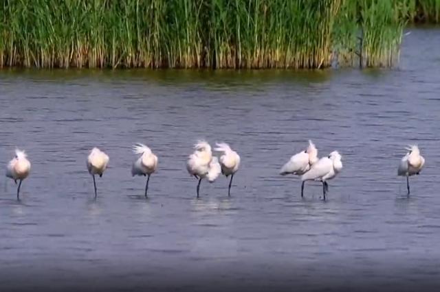 内蒙古包头市绝美的观鸟地——南海湿地公园
