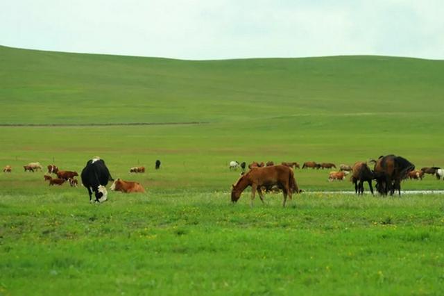 内蒙古呼和浩特市:用自然种源 守护共同家园
