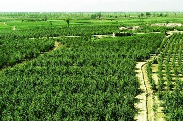 内蒙古实施黄河重点生态区生态保护和修复工程