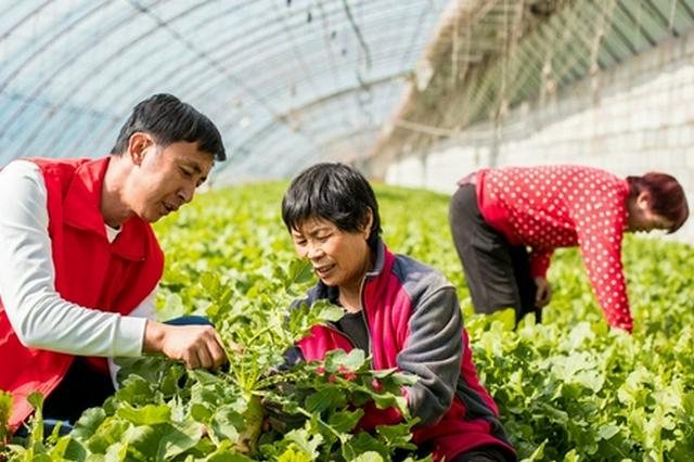 内蒙古自治区呼和浩特市:农科人员传技促增收