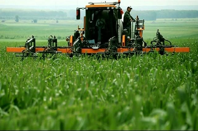 通辽市:产量稳定,1700万亩玉米喜获丰收