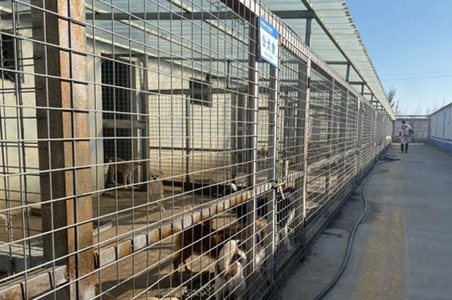 """呼和浩特市规范养犬:为""""小可爱""""们创建和谐家园"""