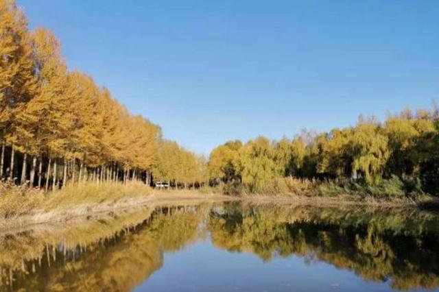 """黄河穿沙而入 内蒙古筑起""""保卫黄河""""绿色屏障"""