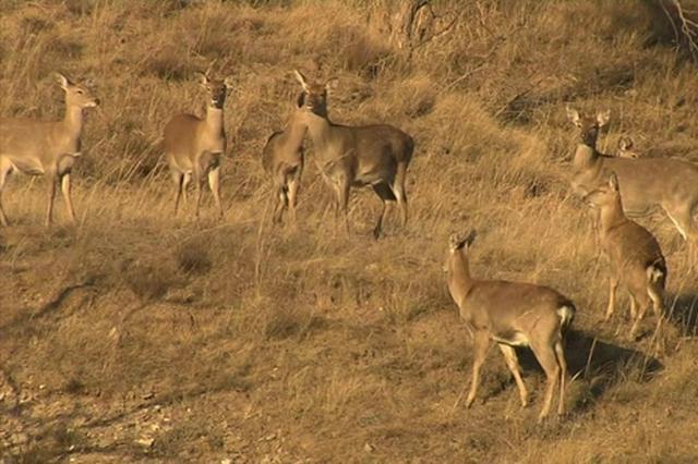 罕见!近千只国家重点保护野生动物同时出现