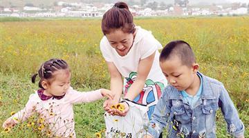 呼和浩特新城区首届雪菊茶采摘文化节开幕