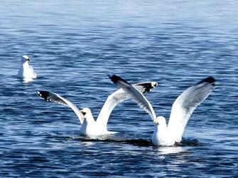 内蒙古开展候鸟保护专项行动