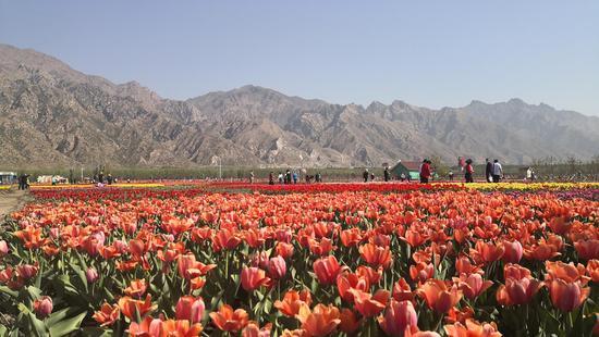 内蒙古网红打卡地 丨 内蒙古七彩大地旅游景区
