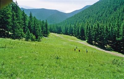 退牧后贺兰山生态环境得到了明显改善。刘宏章 摄