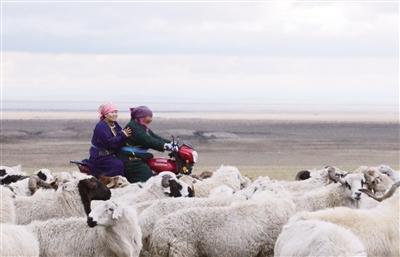 达木达玛骑着摩托车去放羊。