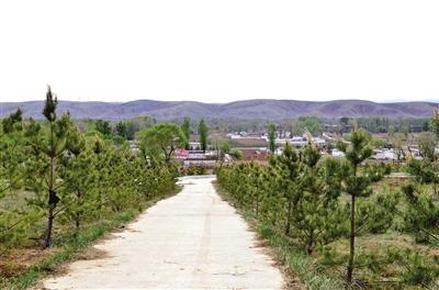 村庄绿树掩映