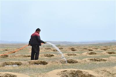 村民正在为沙棘浇水