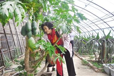 乡村休闲游带动农区发展。海东 摄