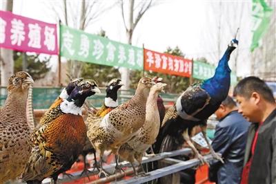 吸睛的优质畜禽展区。