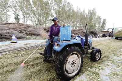 10月9日,通辽市库伦旗六家子镇青海种养殖合作社社民正在制作青贮饲料。本报记者 金泉 摄