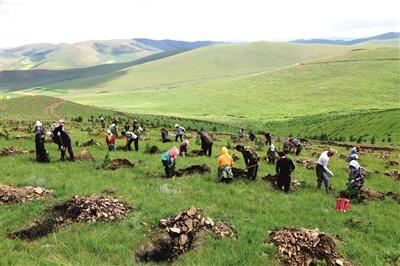 植树造林施工现场。