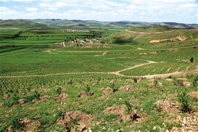规模化林场建设平甸沟项目区。