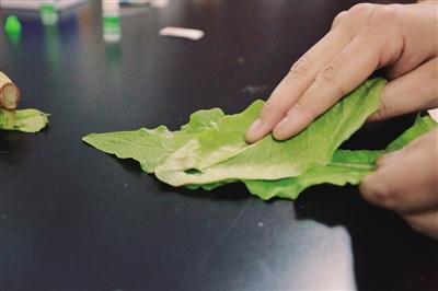 摩擦让洗脱剂更好地吸取农药残留物