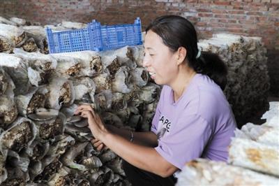 图为李忠祥的妻子正在查看蘑菇长势。张晓静 摄