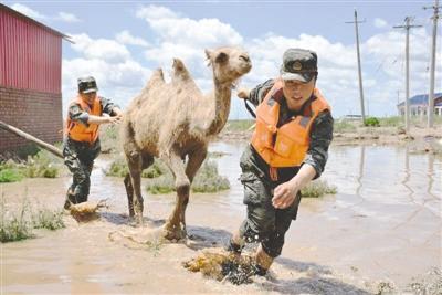 武警战士帮助受灾群众转移牲畜。本报记者 韩继旺 摄
