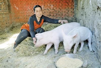 李林花饲养的小猪。