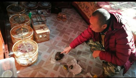 李先生家死去的巴西龟和鸟儿