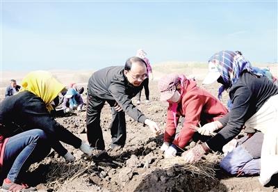 韩俊九在药材种植基地查看收成。 本报记者 巴依斯古楞 摄