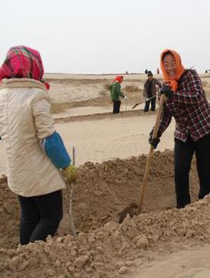 中国第二大沙地的植绿人成致富带头人