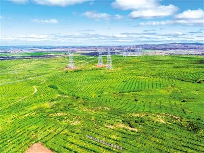 百万亩樟子松造林工程大河口项目区。