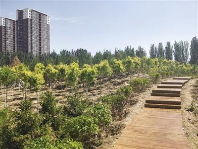 公园里用木板铺成的台阶掩映在绿色中