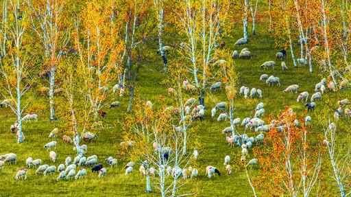 爱上内蒙古 | 镜头记录下兴安秋季最后一抹彩色