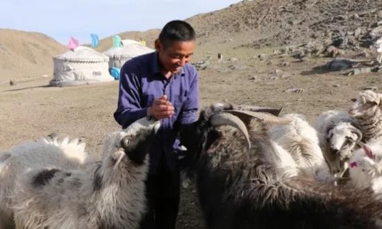主人扎莱格尔和他的羊群
