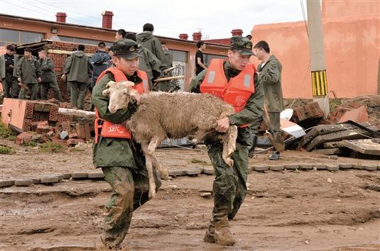 消防战士帮助张发地村村民转移羊群。(本版照片均由记者安吉斯摄)